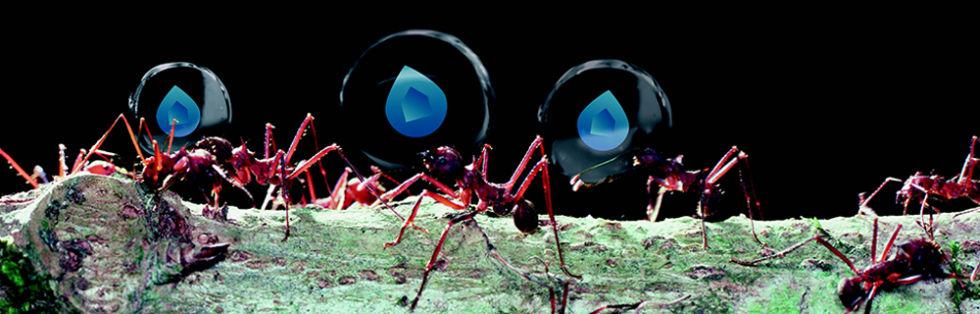 POC-ABOUT_images-filosofie-mieren