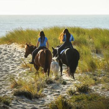 lifestyle_horses