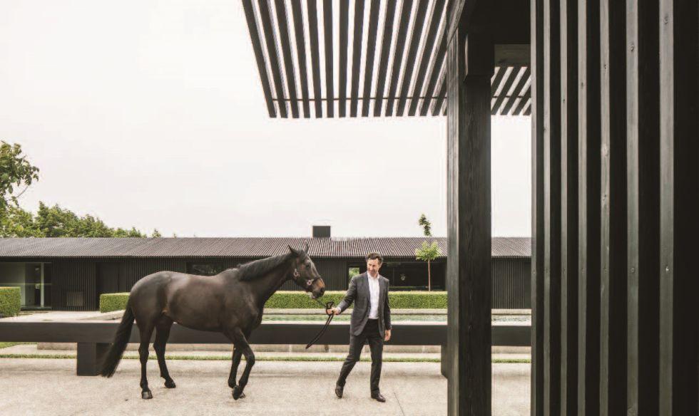 peter met paard