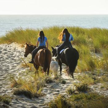 lifestyle_horses_700x700_bijgeknipt_700x700_bijgeknipt-1